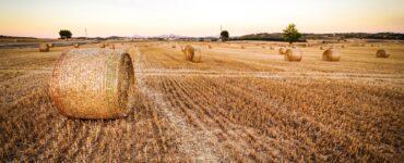 Vaste champ d'herbes jaunies avec des silos